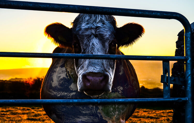 Cowspiracy, time to eat differently